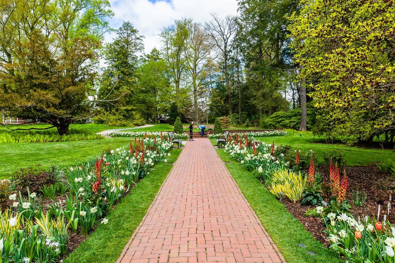 宾州长木公园,多彩的郁金香_图1-11