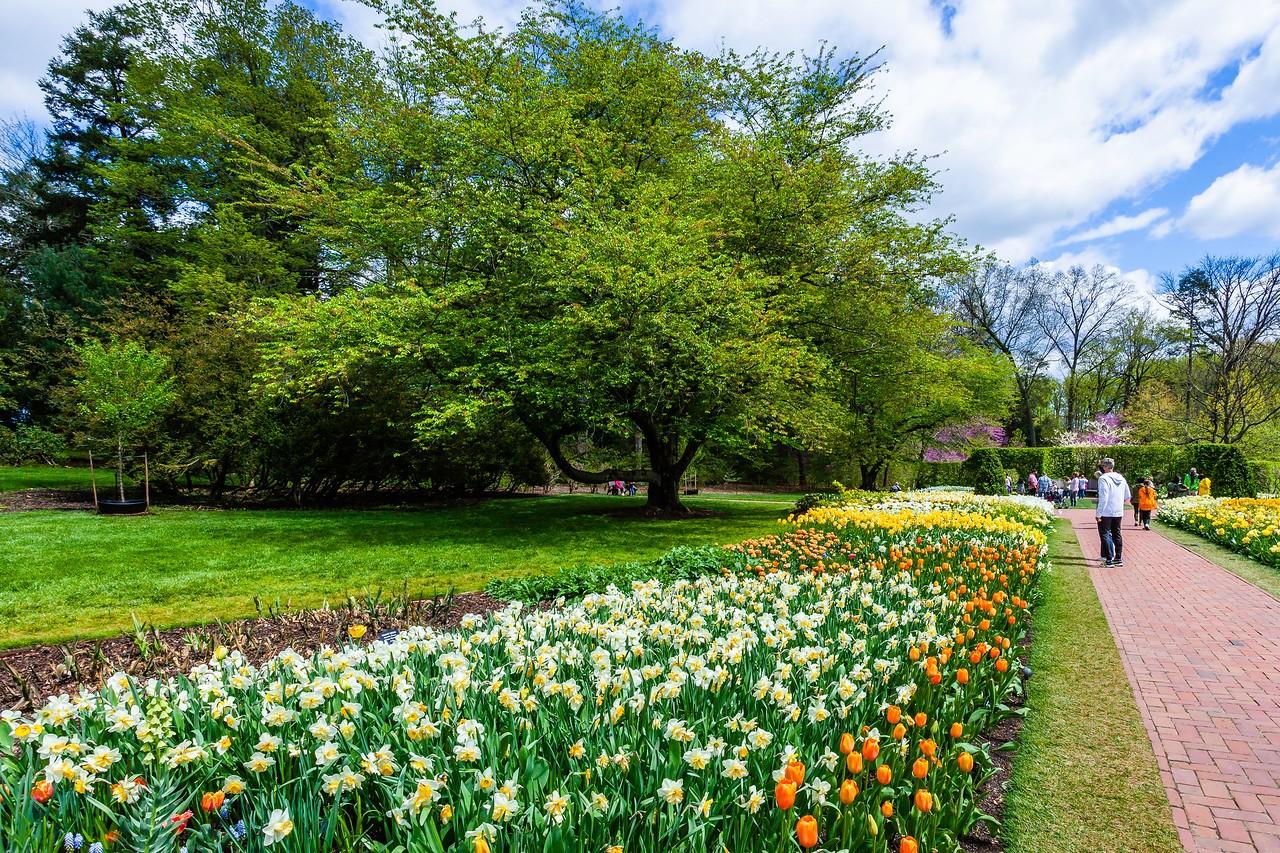 宾州长木公园,多彩的郁金香_图1-6