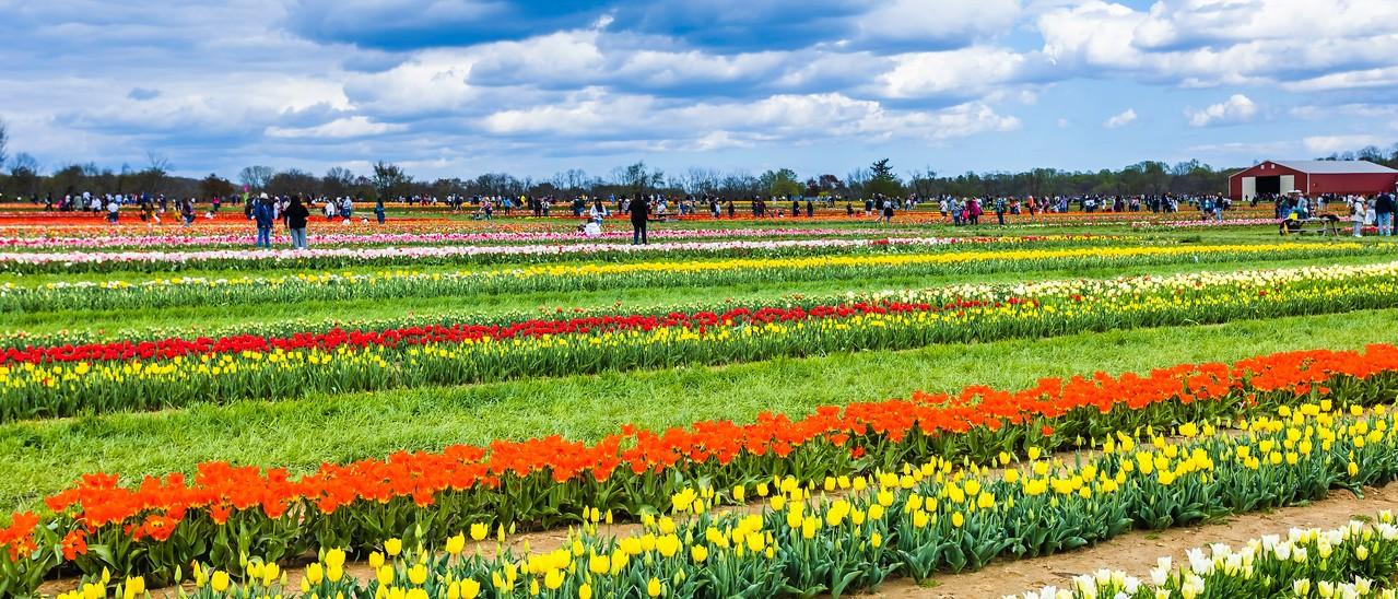 荷兰岭农场(Holland Ridge Farms, NJ),一眼望去_图1-6