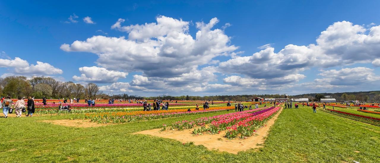 荷兰岭农场(Holland Ridge Farms, NJ),一眼望去_图1-8