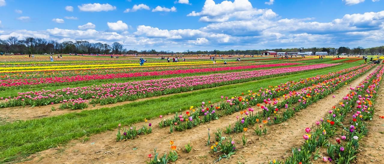 荷兰岭农场(Holland Ridge Farms, NJ),一眼望去_图1-3