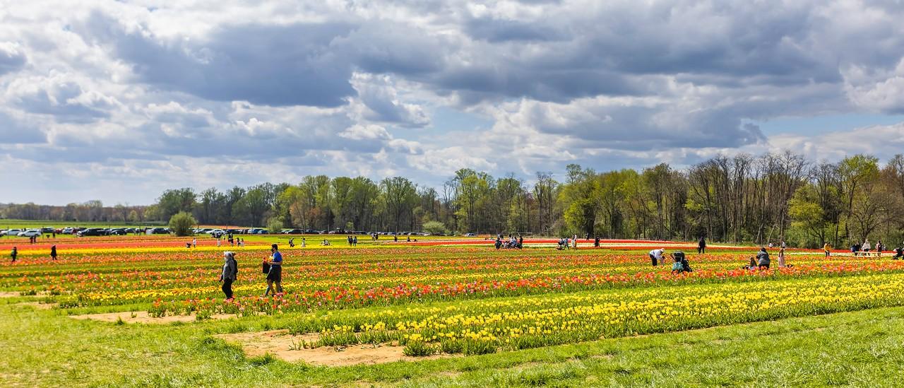 荷兰岭农场(Holland Ridge Farms, NJ),一眼望去_图1-4