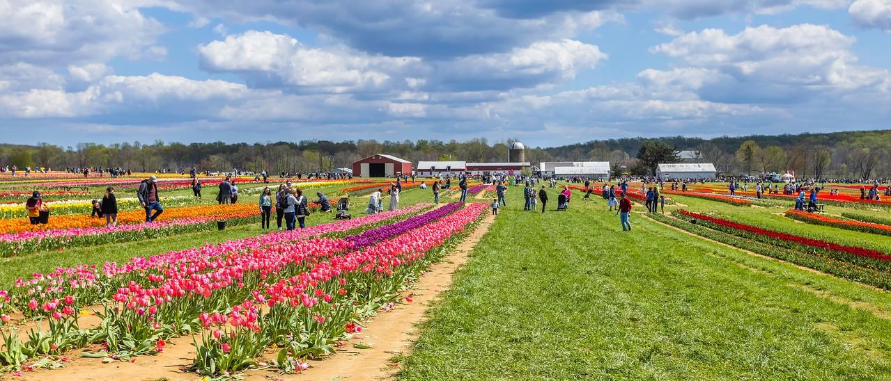荷兰岭农场(Holland Ridge Farms, NJ),一眼望去_图1-2
