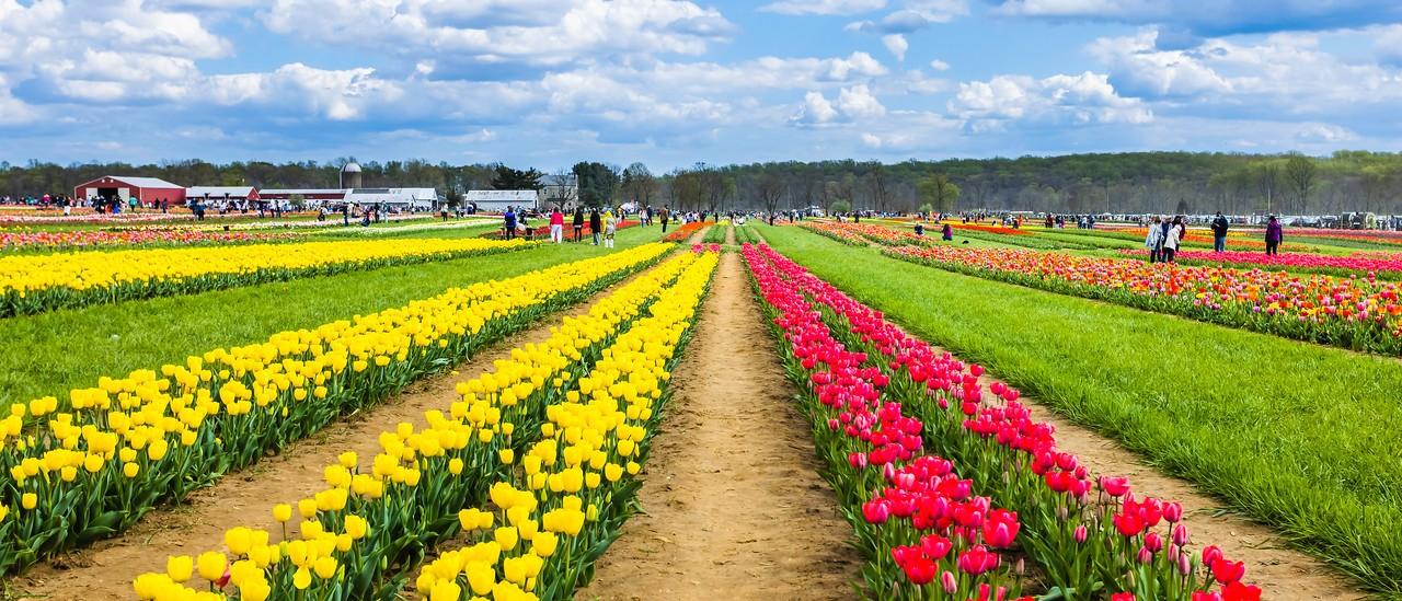 荷兰岭农场(Holland Ridge Farms, NJ),一眼望去_图1-7