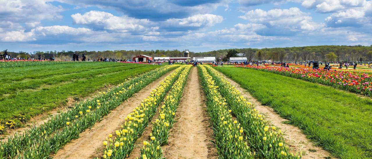 荷兰岭农场(Holland Ridge Farms, NJ),一眼望去_图1-1