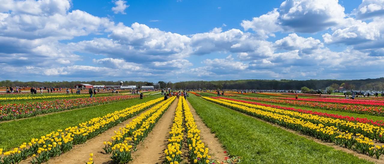 荷兰岭农场(Holland Ridge Farms, NJ),一眼望去_图1-12