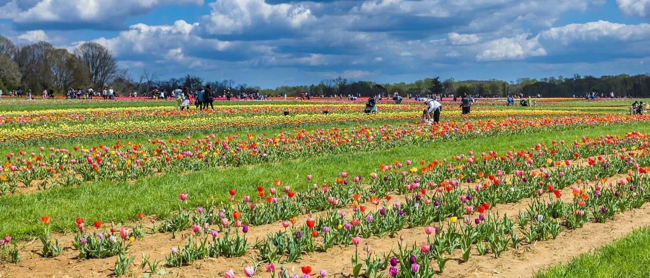 荷兰岭农场(Holland Ridge Farms, NJ),一眼望去_图1-11