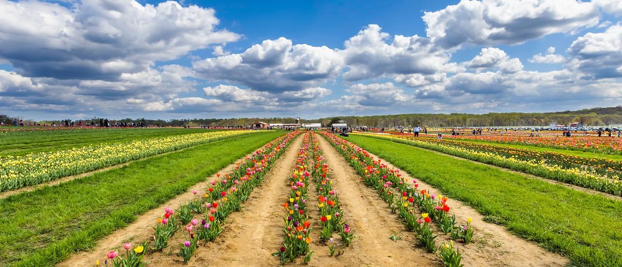 荷兰岭农场(Holland Ridge Farms, NJ),一眼望去_图1-9