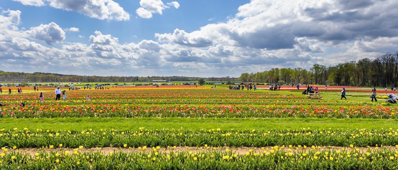 荷兰岭农场(Holland Ridge Farms, NJ),一眼望去_图1-13