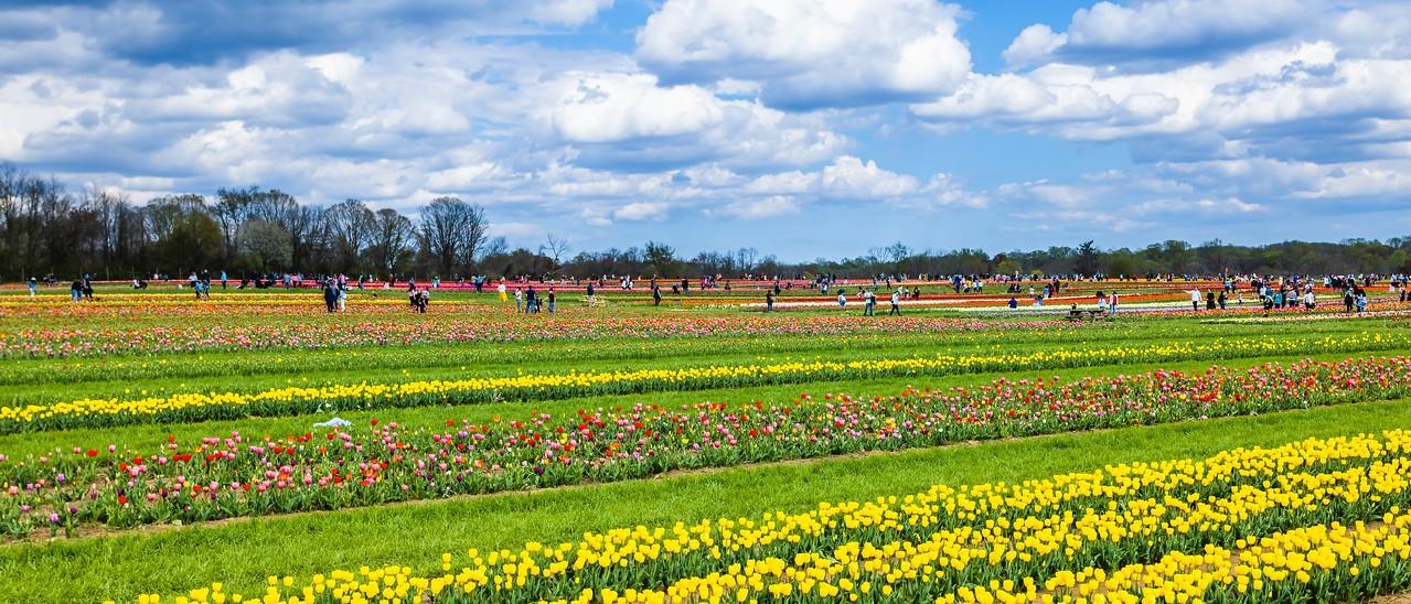 荷兰岭农场(Holland Ridge Farms, NJ),一眼望去_图1-14