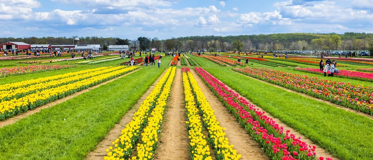 荷兰岭农场(Holland Ridge Farms, NJ),一眼望去_图1-15