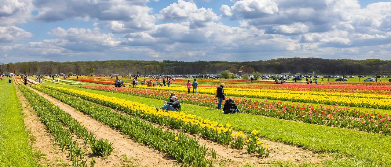 荷兰岭农场(Holland Ridge Farms, NJ),一眼望去_图1-16