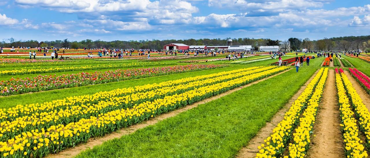 荷兰岭农场(Holland Ridge Farms, NJ),一眼望去_图1-20