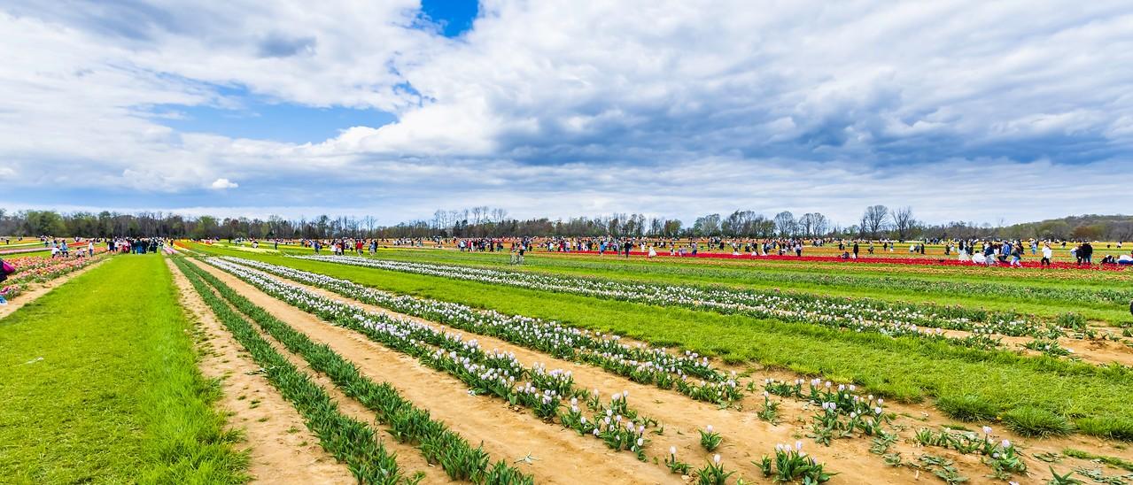 荷兰岭农场(Holland Ridge Farms, NJ),一眼望去_图1-18