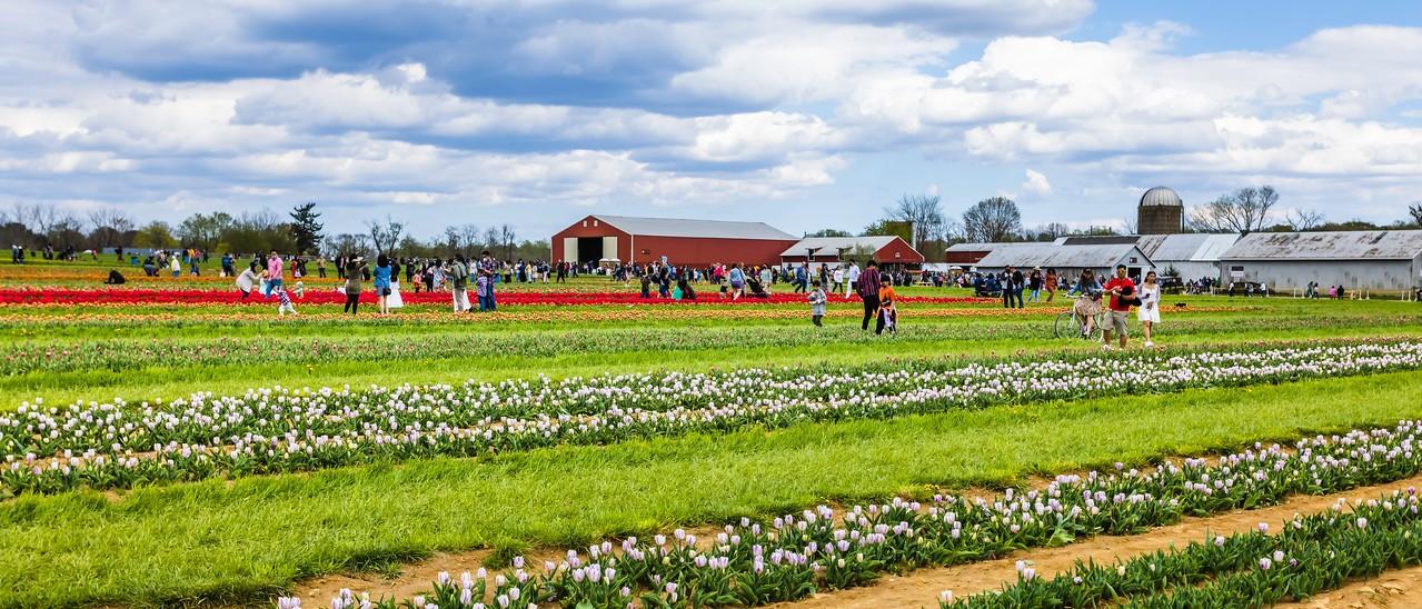 荷兰岭农场(Holland Ridge Farms, NJ),一眼望去_图1-17