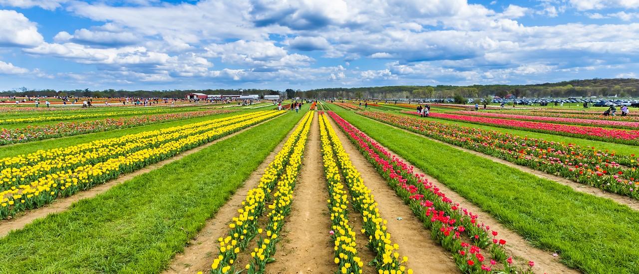 荷兰岭农场(Holland Ridge Farms, NJ),一眼望去_图1-19