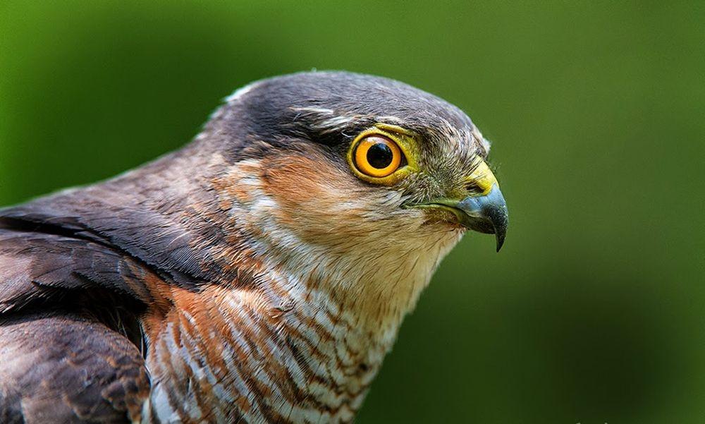 卡塔维国家公园之-禽鸟区_图1-1