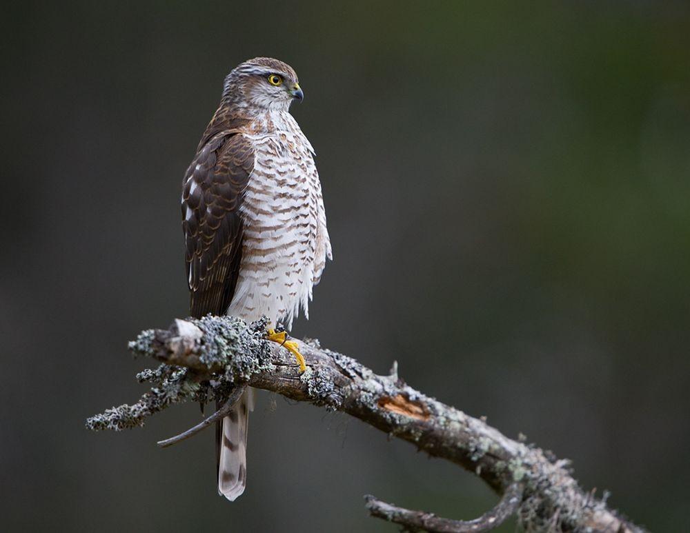 卡塔维国家公园之-禽鸟区_图1-2