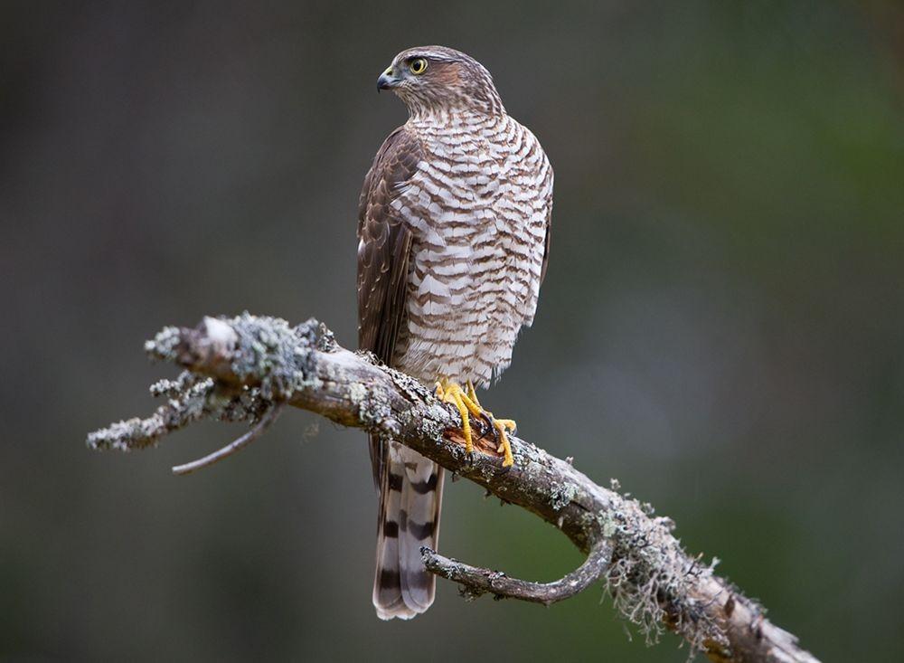 卡塔维国家公园之-禽鸟区_图1-3