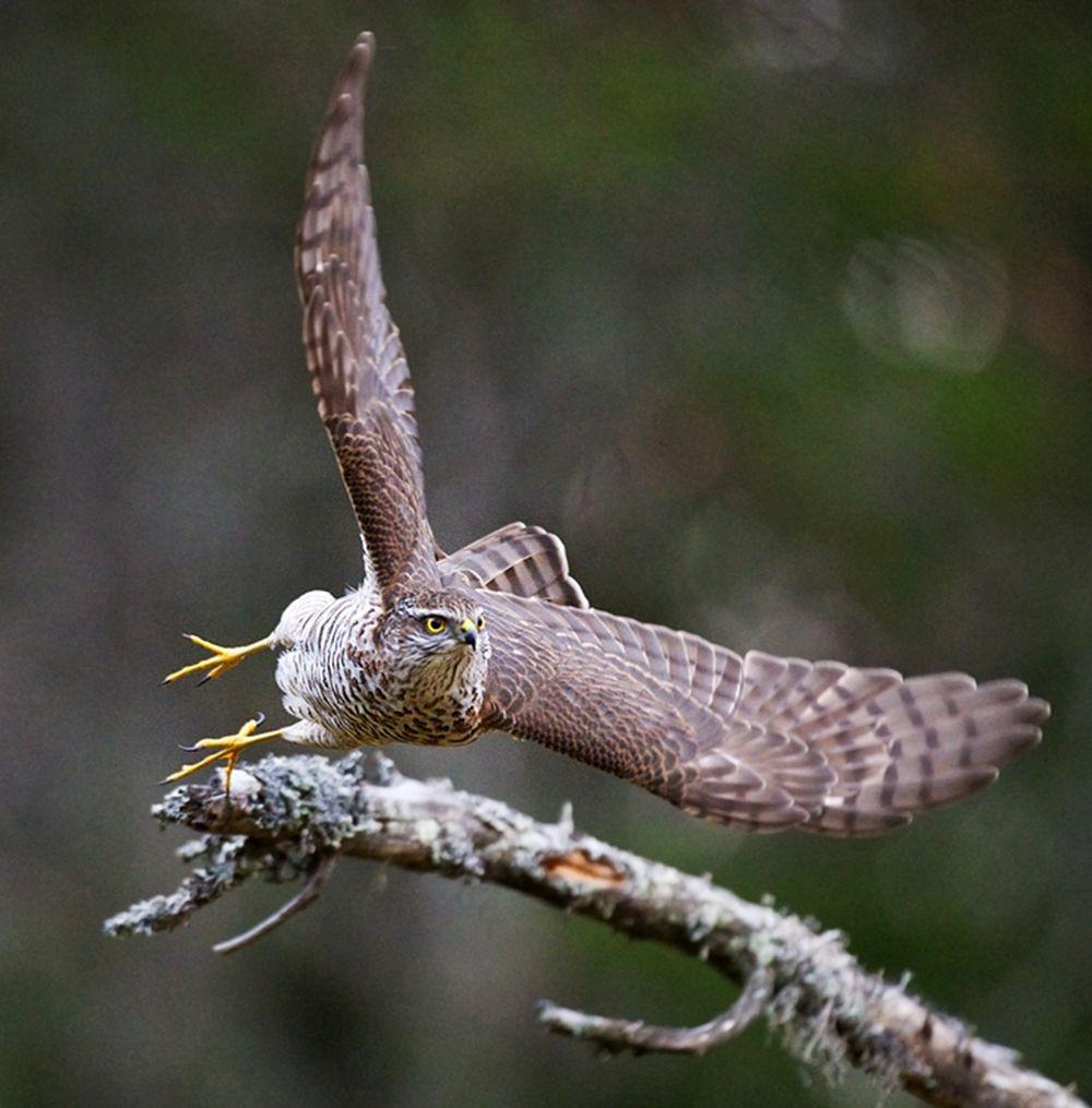 卡塔维国家公园之-禽鸟区_图1-4