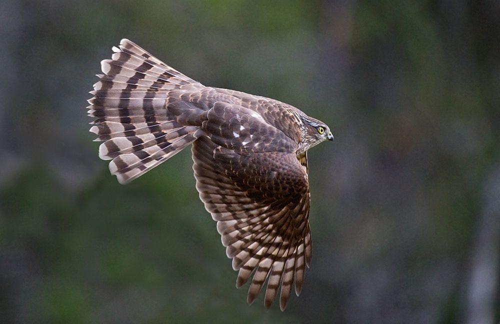 卡塔维国家公园之-禽鸟区_图1-5