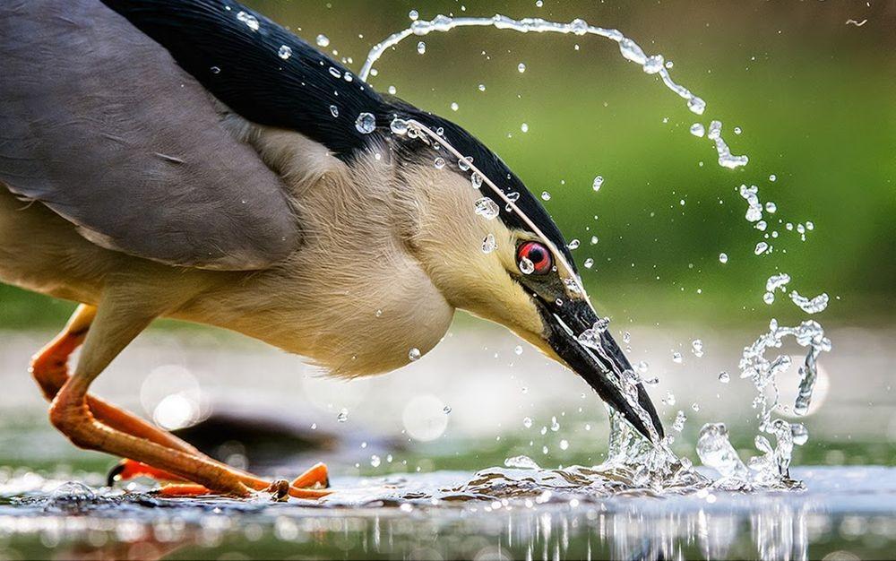 卡塔维国家公园之-禽鸟区_图1-7