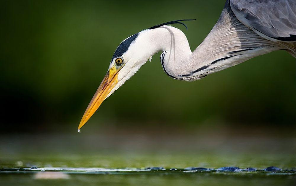 卡塔维国家公园之-禽鸟区_图1-8