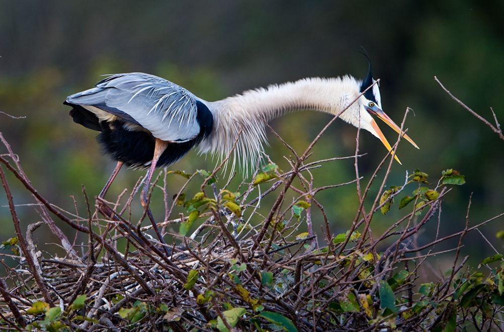 卡塔维国家公园之-禽鸟区_图1-9