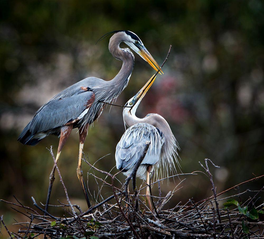 卡塔维国家公园之-禽鸟区_图1-10