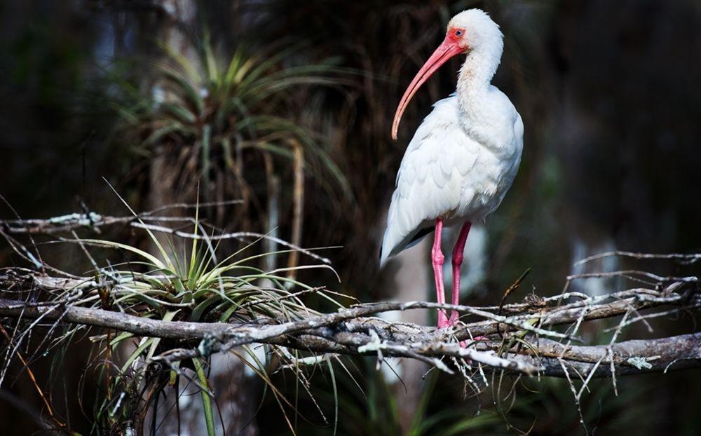 卡塔维国家公园之-禽鸟区_图1-11
