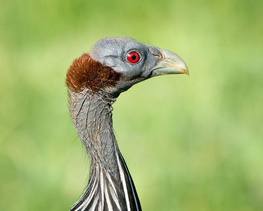 卡塔维国家公园之-禽鸟区_图1-18