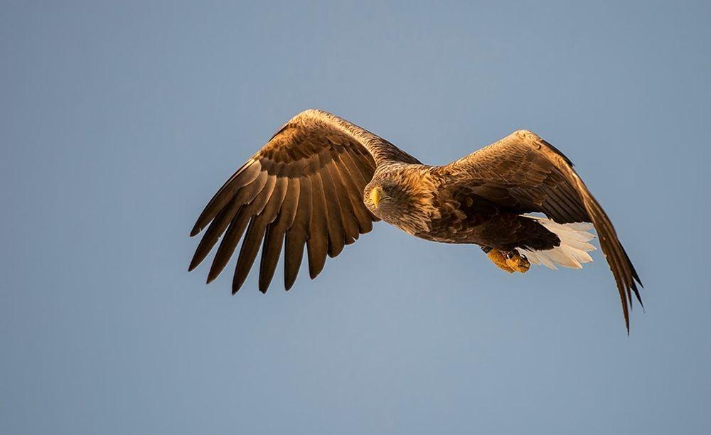 卡塔维国家公园之-禽鸟区_图1-24