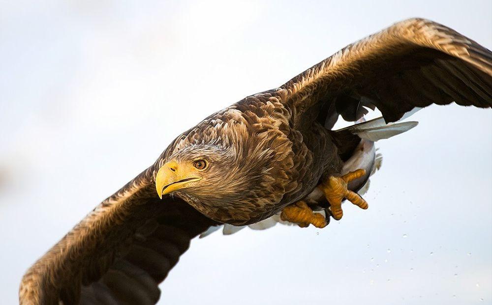 卡塔维国家公园之-禽鸟区_图1-25