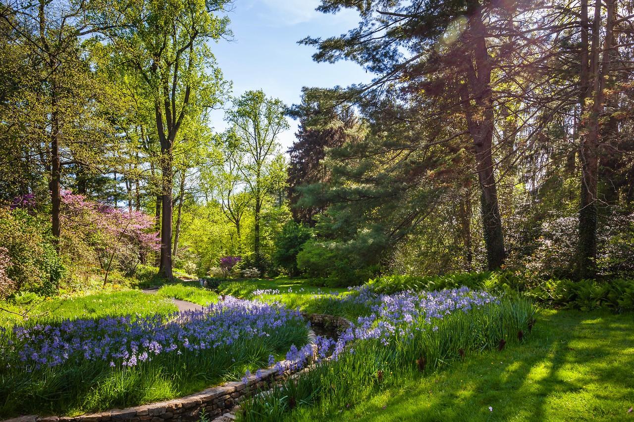 Chanticleer花园,春天的阳光_图1-15
