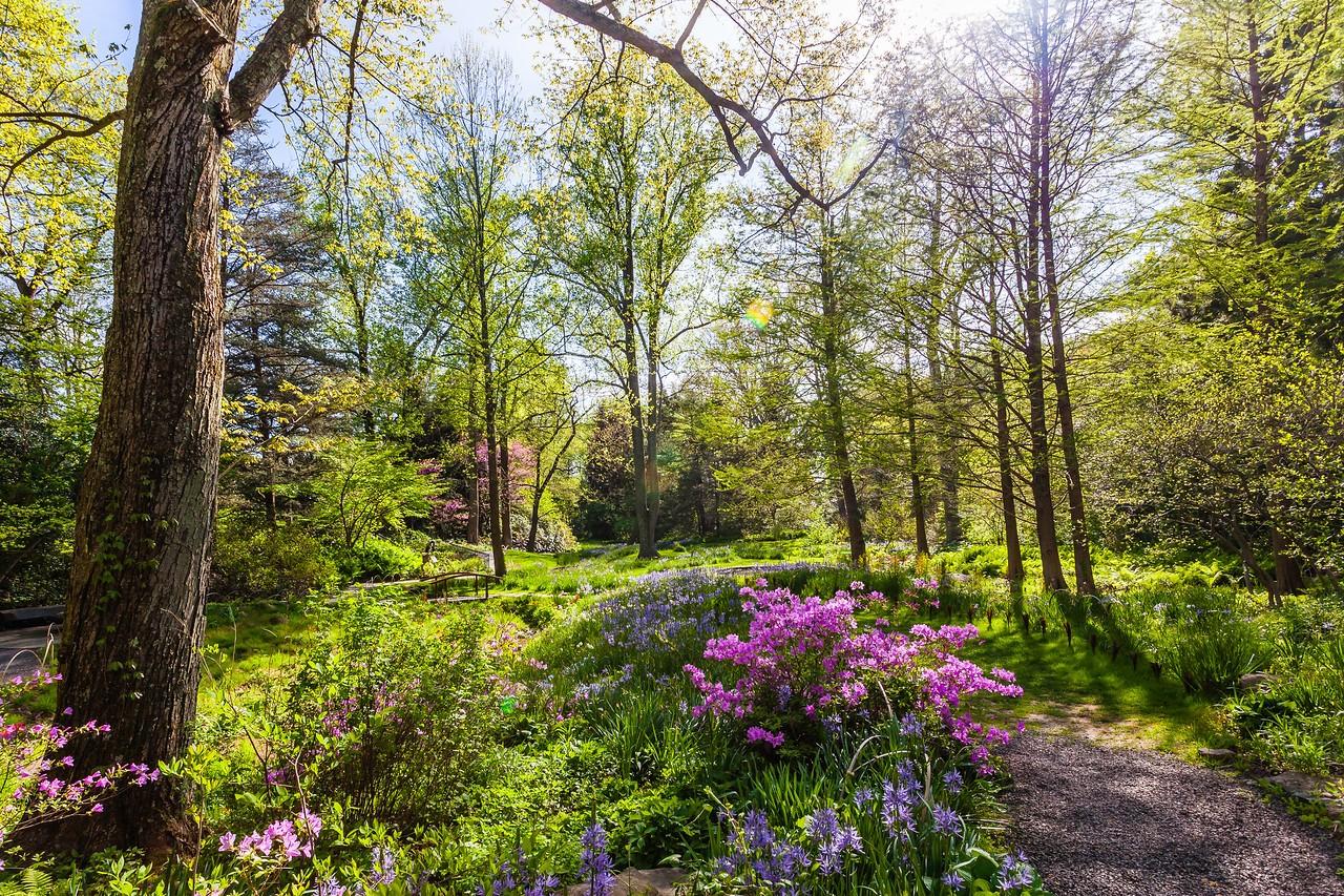 Chanticleer花园,春天的阳光_图1-8
