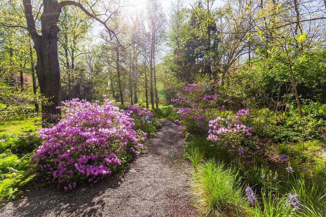 Chanticleer花园,春天的阳光_图1-9