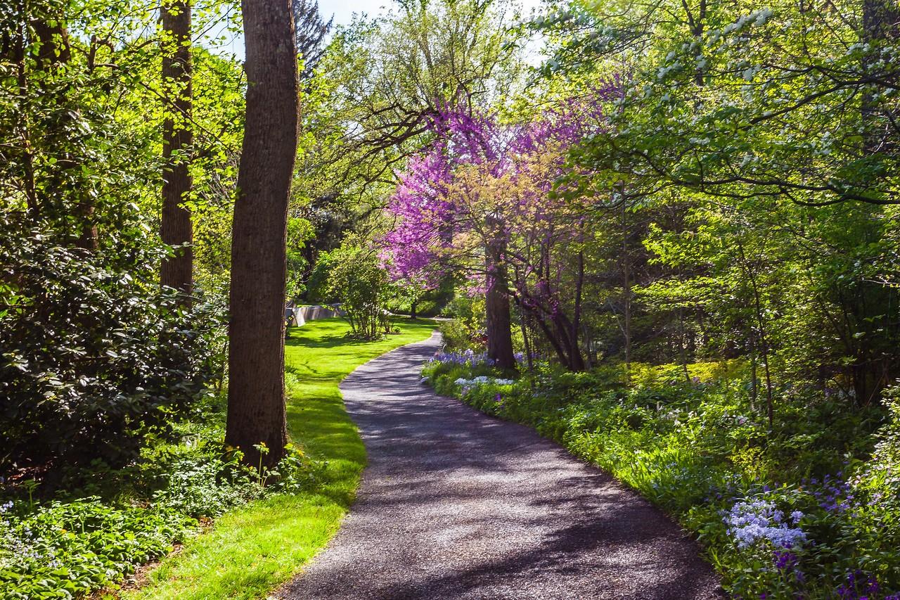 Chanticleer花园,春天的阳光_图1-7
