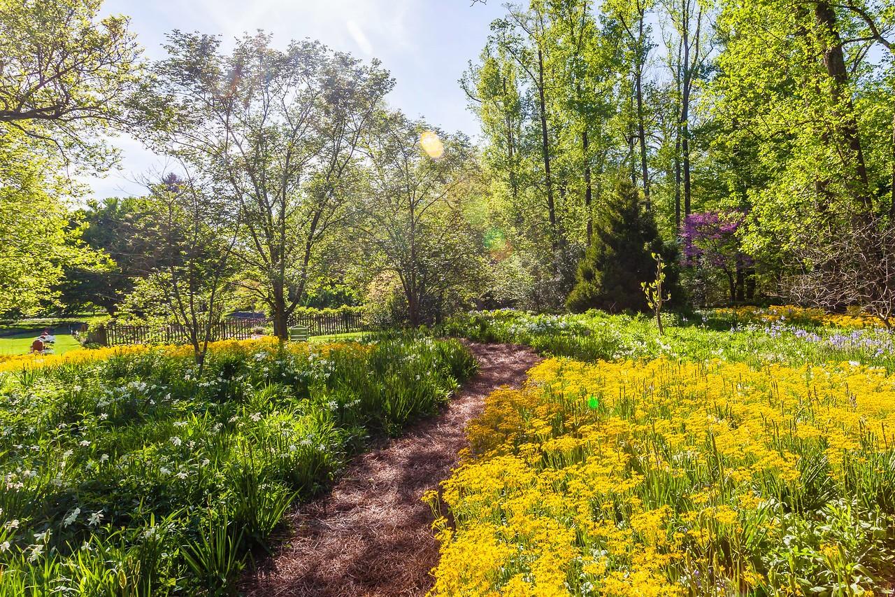 Chanticleer花园,春天的阳光_图1-6