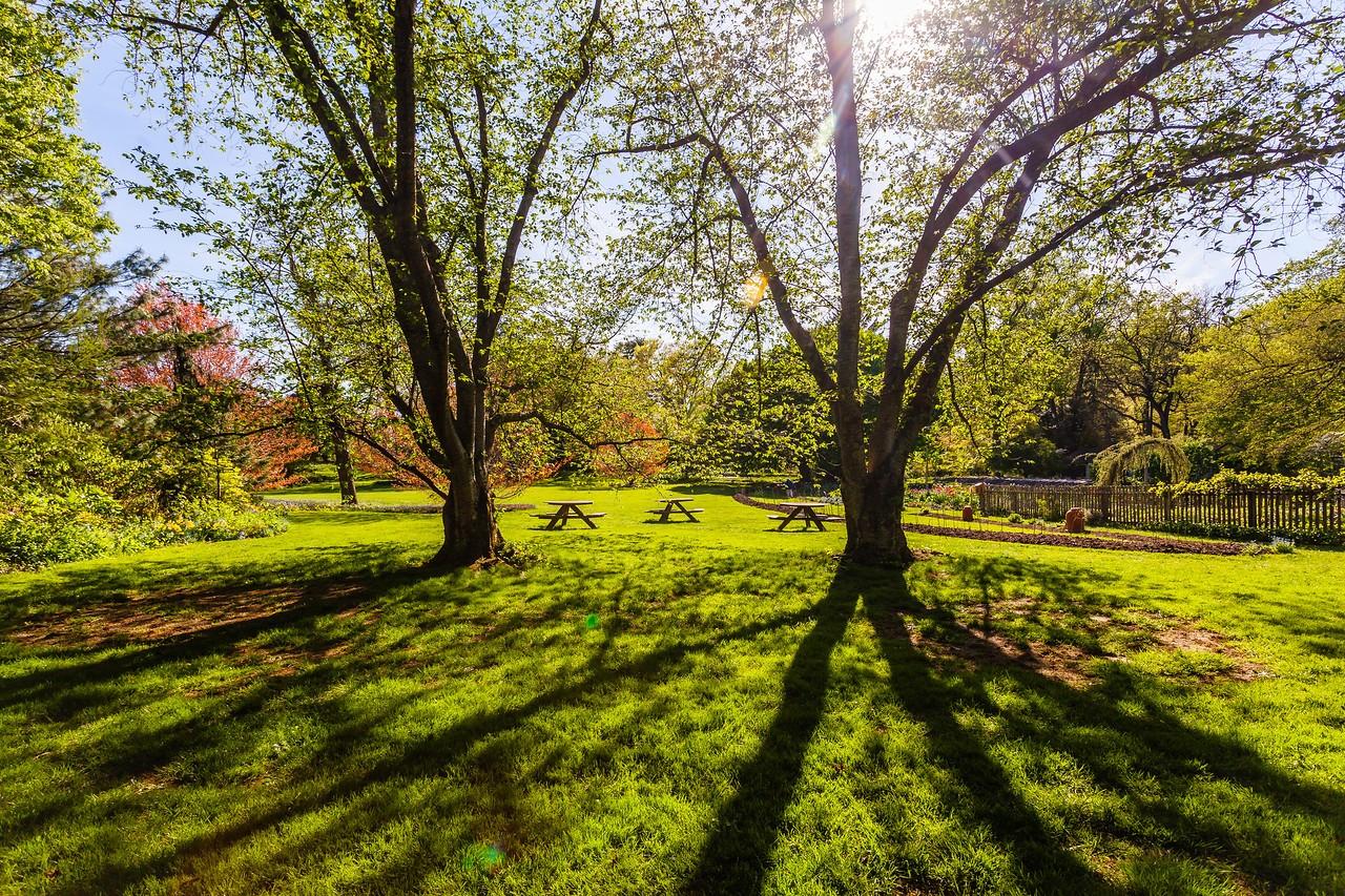 Chanticleer花园,春天的阳光_图1-5