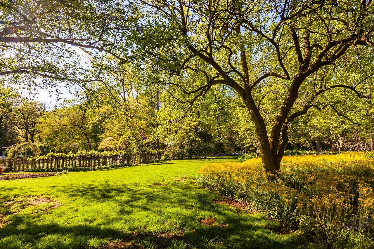 Chanticleer花园,春天的阳光_图1-4