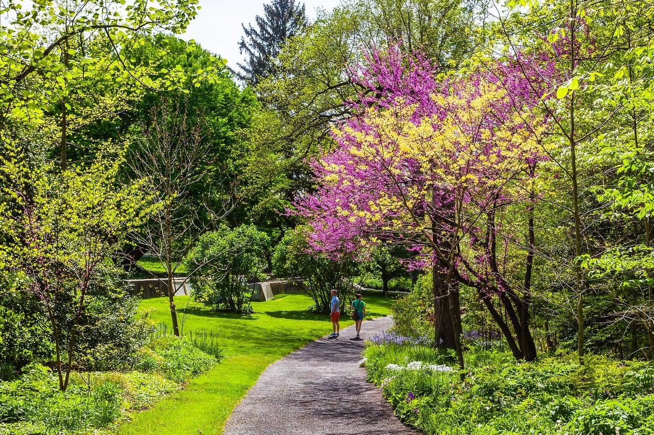 Chanticleer花园,春天的阳光_图1-2