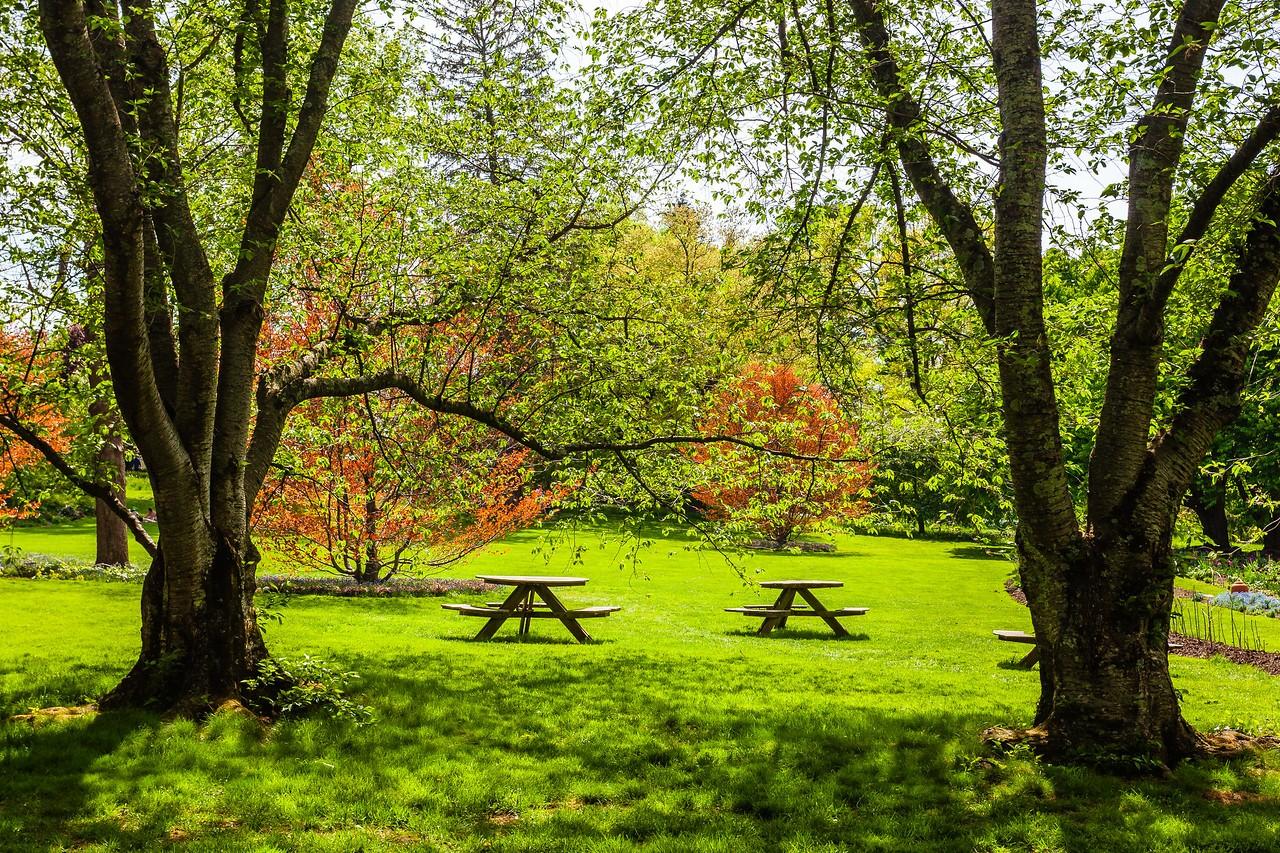 Chanticleer花园,春天的阳光_图1-1