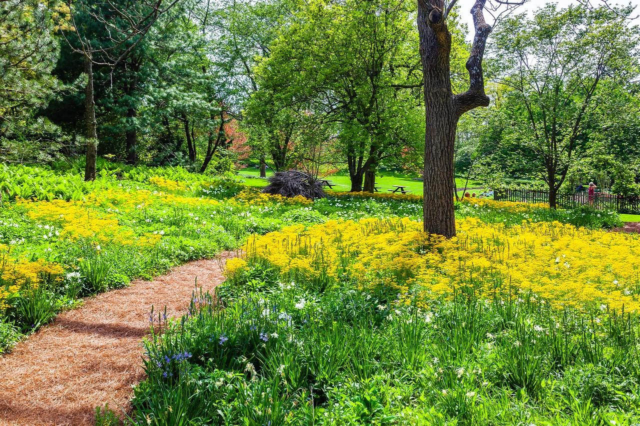 Chanticleer花园,春天的阳光_图1-3