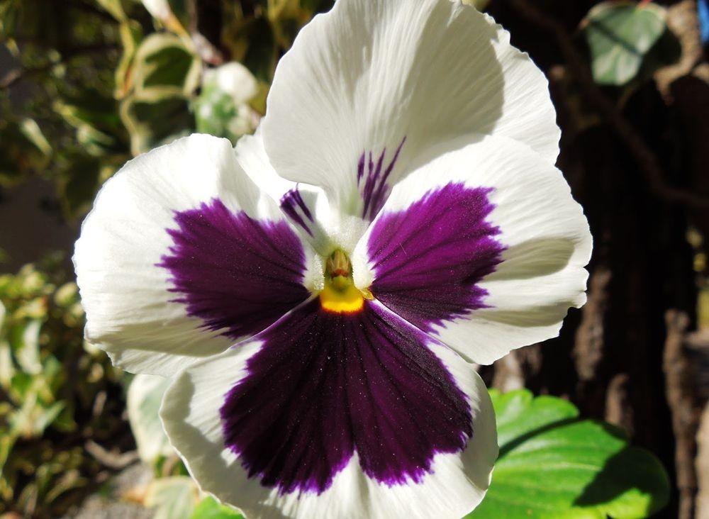 花卉日记-48_图1-1