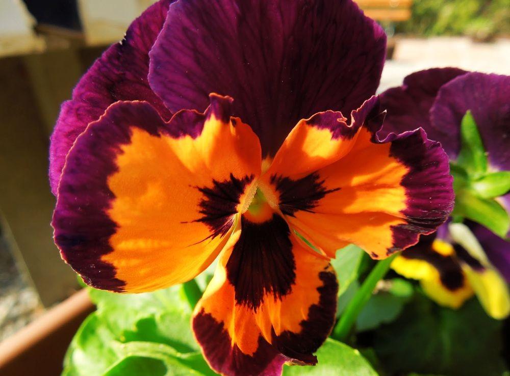 花卉日记-48_图1-2