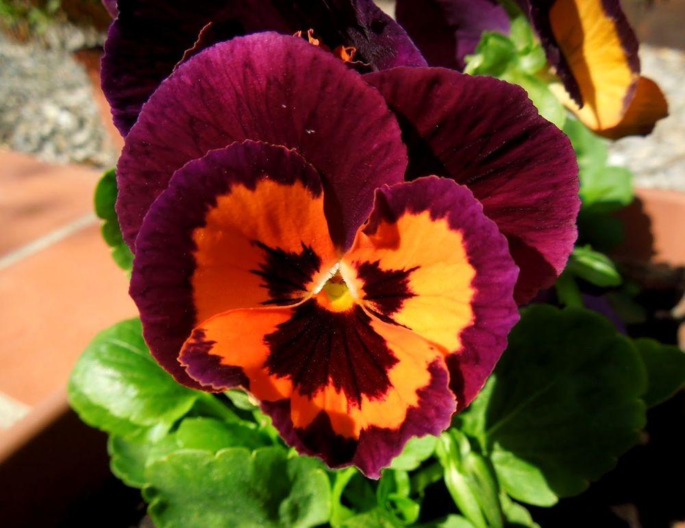 花卉日记-48_图1-3