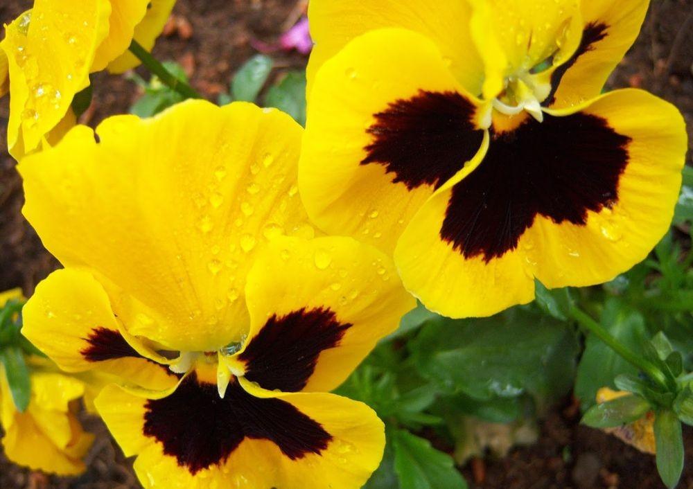 花卉日记-48_图1-4