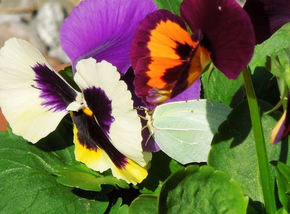 花卉日记-48_图1-5
