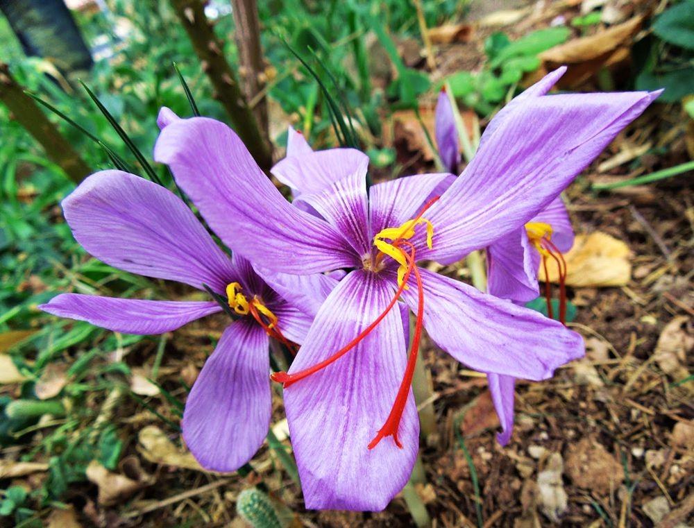 花卉日记-48_图1-6