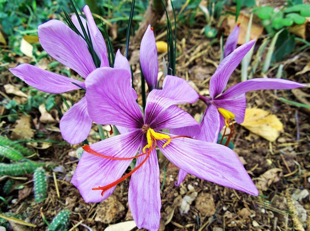 花卉日记-48_图1-7